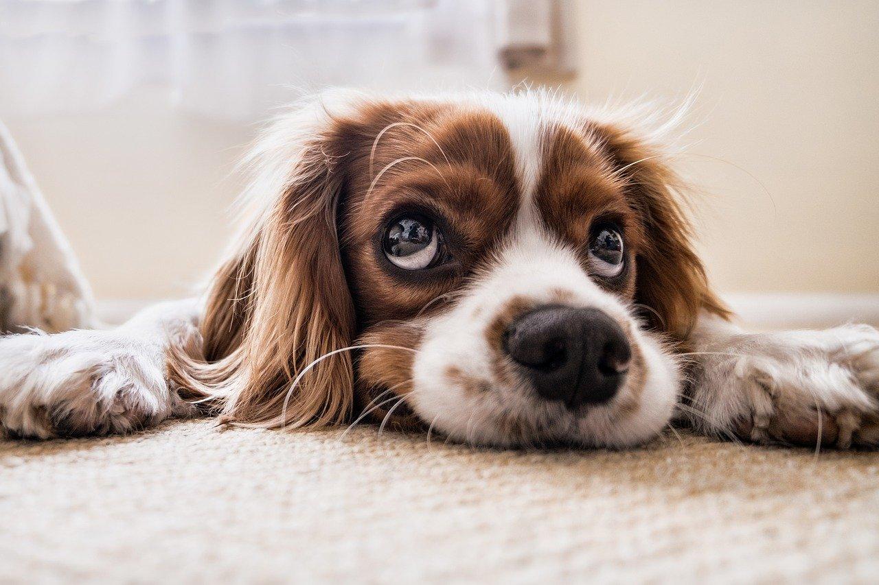 Redno striženje krempljev pri psih je izrednega pomena za vašega kosmatinca
